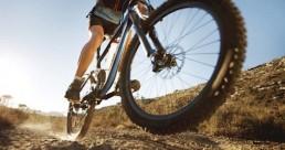 Under Down Under Mount Wellington Descent Bike Tour