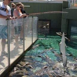 Crocosaurus Cove Big Croc Feed VIP Experience