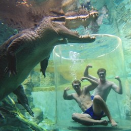 Crocosaurus Cove Cage of Death (1 Person in Cage)