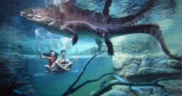 Crocosaurus Cove Cage of Death (2 People in Cage)