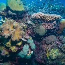 Down Under Cruise & Dive Evolution Cruise – Snorkel