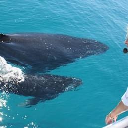 Brisbane Whale Watching Whale Watching with Sunshine Coast Transfers