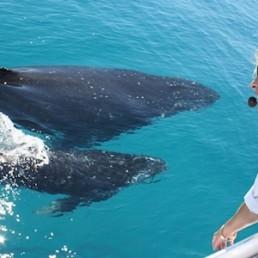 Brisbane Whale Watching Whale Watching – VIP