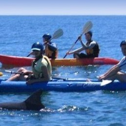 Cape Byron Kayaks Kayak with the Dolphins Tour