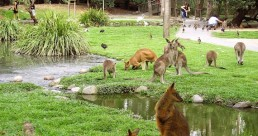 Wildlife Habitat Day Entry