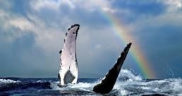 Wild Byron Whale Watching Safari
