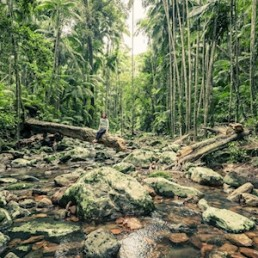 Wild Byron Minyon Waterfall Rainforest Tour