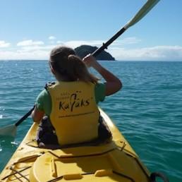 Abel Tasman Kayaks Seal Sanctuary Tour