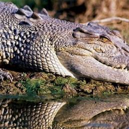 AAT Kings Jumping Crocs & Nature Adventure